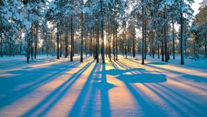 Zachód słońca w lesie