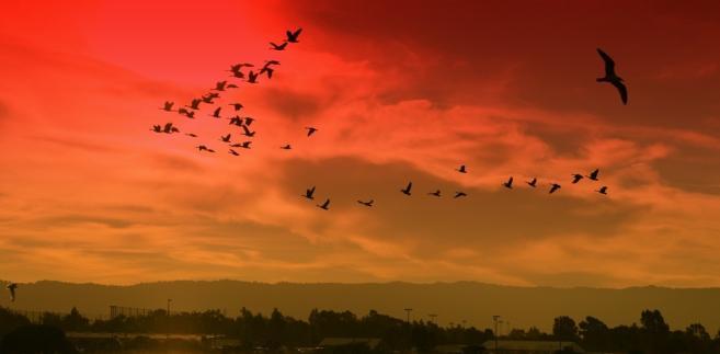 Zachód słońca nad zatoką w Palo Alto