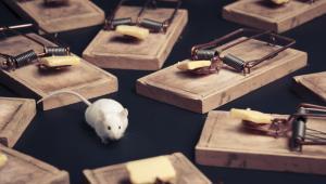 Mysz otoczona pułapkami